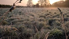 A frosty spider web in Norfolk