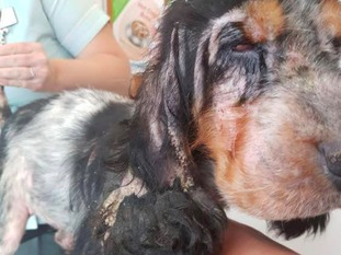 Ravenswood are appealing for people to help with funds to keep her alive.