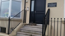 The RNLI in Redcar saved a seal sheltering on a doorstep