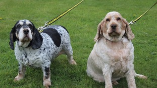 The two 'inseparable' dieting dogs looking for a new home