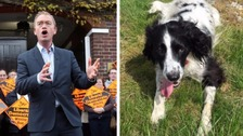 Smell my spaniel: Tim Farron causes a stir on campaign trail