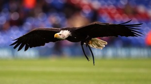 Charlton Athletic fan jailed for swinging punch at Crystal Palace's eagle mascot