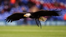 Charlton fan jailed for swinging punch at eagle mascot