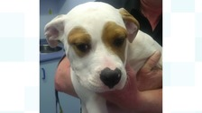 Cash will be available for re-homing soon.