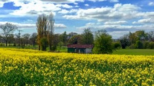 Spring in Clara Vale  CAROLYN FARTHNG-DUNN