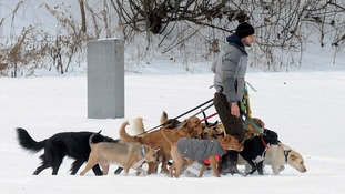 This dog walker could get more than one fine.
