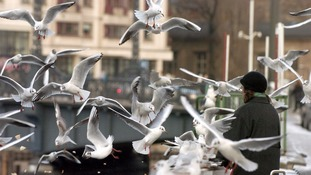A file photo of a person feeding seagulls.