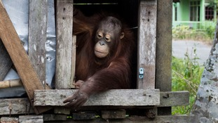Kotap did not want to leave his box as he was frightened by the outside world.