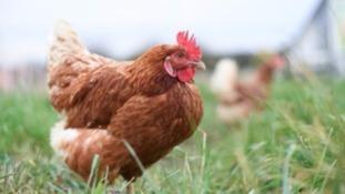 Bird flu outbreak at Lancashire farm