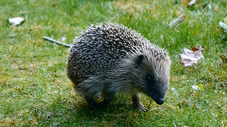 animals london itv news