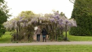 Prince's Gardens