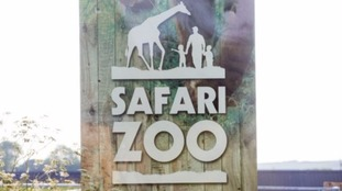 Safari Zoo
