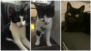 RSPCA Cymru launches appeal after three cats die from suspected poisonings in Risca