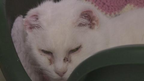 P-CAT_SUNCREAM