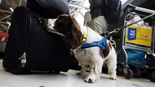 Sniffer dogs to visit Cornish schools in drugs crackdown