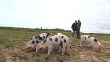 David and Elizabeth Ottley on their farm in north Norfolk.
