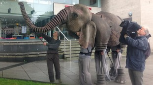 Oona the elephant makes theatre appearance