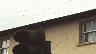 Swarm of bees sends screaming commuters rushing for cover in London