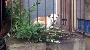 Patch was found behind an empty building on Pyenest Street in Stoke-on-Trent.