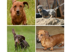 Phoebe, Lola, Millie and Florence have been missing for four weeks