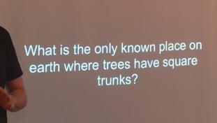 square tree trunks