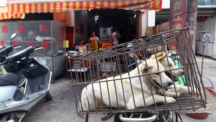 The sale of dog meat is set to be banned at this year's Yulin festival