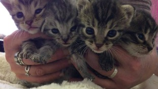 An incredible journey - kittens survive lorry trip from Poland