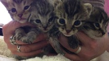 The kittens were discovered in a lorry that had travelled from Poland to Northampton