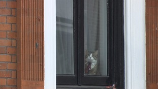 Julian Assange's cat was spotted at the Ecuador embassy today as photographers waited for the WikiLeaks founder to appear.