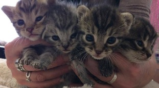 The kittens will be available for rehoming at a later date.