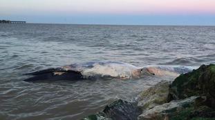 Three whales found dead on Suffolk coast