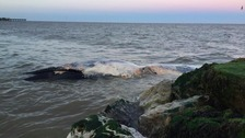 Investigation underway into death of whales found on Suffolk coast