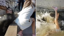 Sea lion snatches girl and pulls her into water