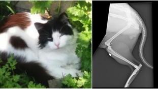 Pet cat shot outside owner's house while children played in garden