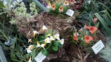 Gold for island gardeners at the Chelsea Flower Show
