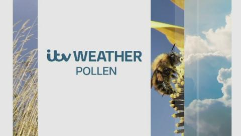 WEATHER_WEB_POLLEN_23517