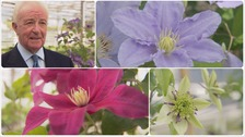 World-famous clematis grower, Raymond Evison