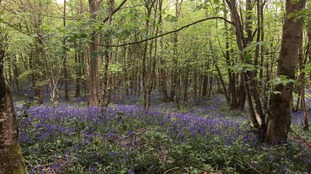 'Violent dogs, drug abuse and illicit sexual activity' closes woodland