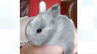 Baby rabbit abandoned in country park found 'just in time'