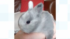 Abandoned baby rabbit found 'just in time'