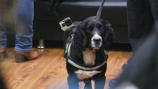 Sniffer dog helps uncover 30,000 fake cigarettes