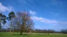 Sunny spells over Anglia