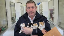 Four tiny kittens dumped near Somerset canal