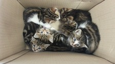 Couple find kittens dumped in box with message 'Pls find us a good home'