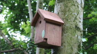 New scheme to boost wildlife numbers in Carlisle