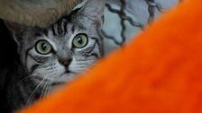 Generic photo of cat