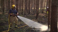 Eight crews tackle forest fire blaze