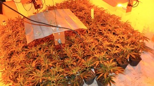 Suspected cannabis farm estimated to be in excess of £400,000 found in Hartlepool