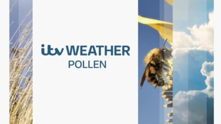 Saturday evening's pollen forecast