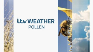 Latest pollen forecast